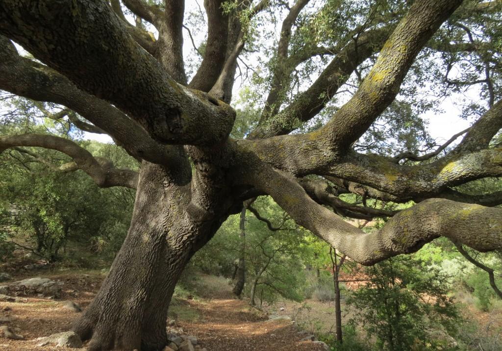 slider_arbres_monumentals