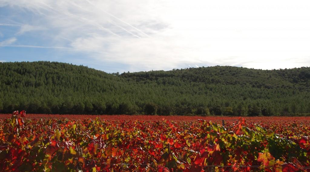 Aiguaviva  (Vinyes d'atardor) (5)